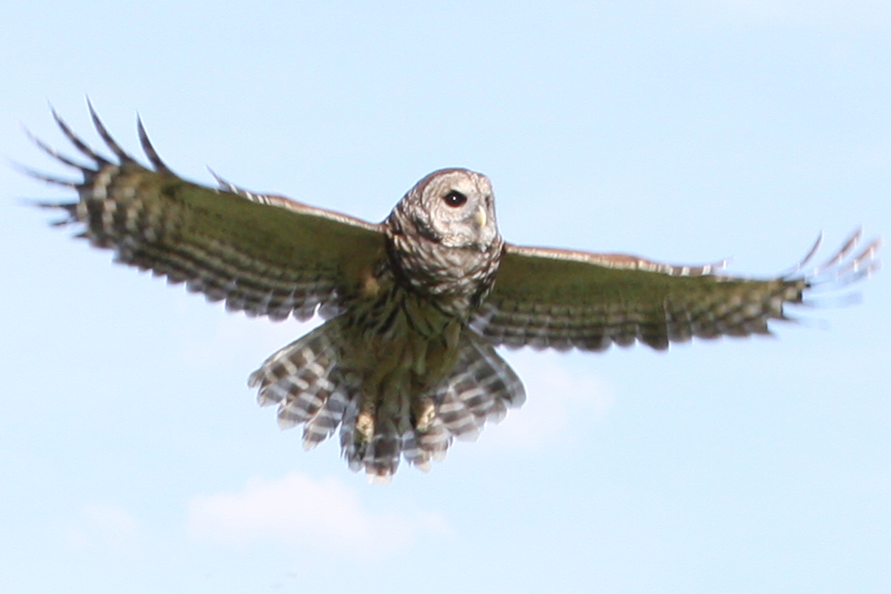 Flying Barred